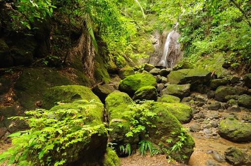 Selva Darien en Capurganá