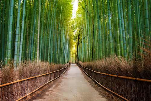 El fantástico bosque de bambú de Arashiyama