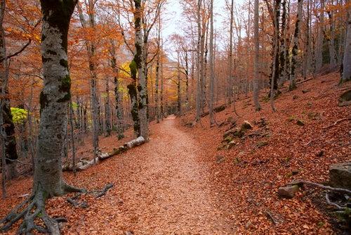 Valle de Ordesa en otoño
