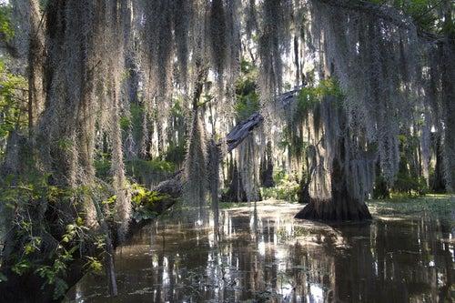 El lago Caddo en Estados Unidos, un peculiar pantano