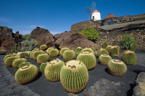 Jardín del Cactus, Lanzarote