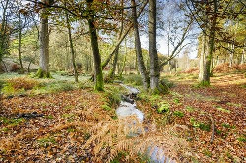 New Forest en Inglaterra