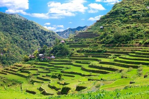 Terrazas de arroz en Filipinas