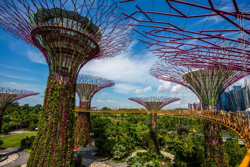 Los espectaculares Gardens by the Bay en Singapur