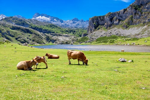 Lago Ercina en Covadonga