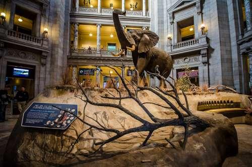 Museo de Historia Natural de Londes