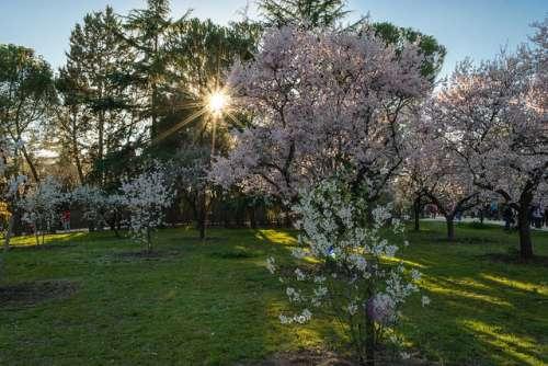 5 parques de Madrid para escapar del estrés