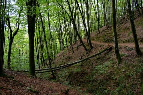 Parque Natural del Señorío de Bértiz