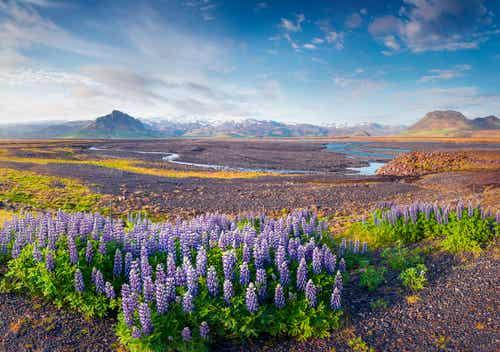 8 cosas que puedes ver y hacer en Islandia