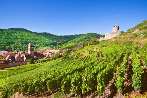 Viñedos en Alsacia