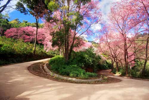 Enamórate en los jardines más románticos del mundo