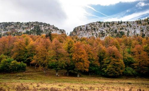 Selva de Oza en Pirineos