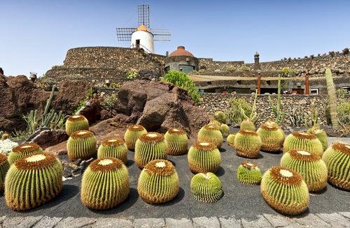 Jardín de Cactus en Teguise