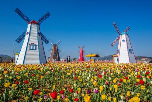Una pausa el tiempo con esta ruta por los Países Bajos