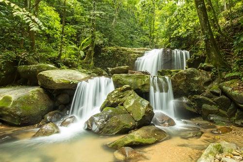 Selva de Borneo