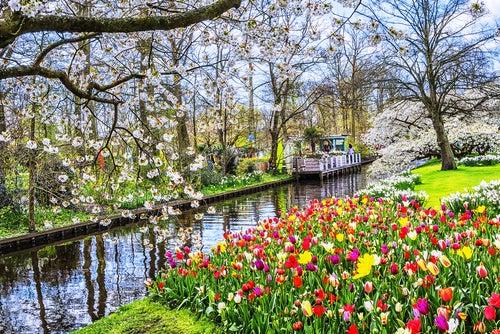 Parque Keukenhof en Holanda