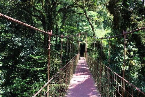 Bosque Nuboso Monteverde en Costa Rica