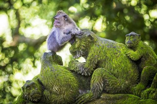 Templo de los Monos en Bali