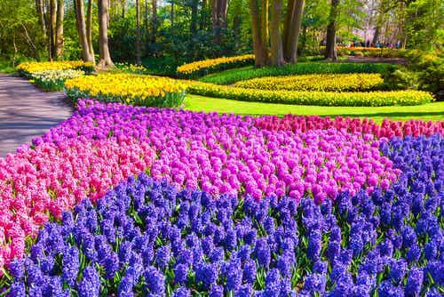 Keukenhof, el jardín más bonito de Holanda