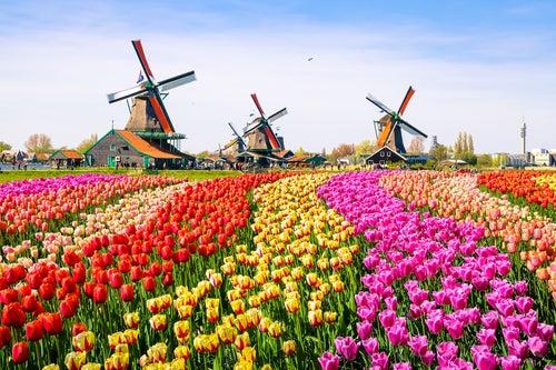 Desde Ámsterdam conoce el pueblo de Zaanse Schans