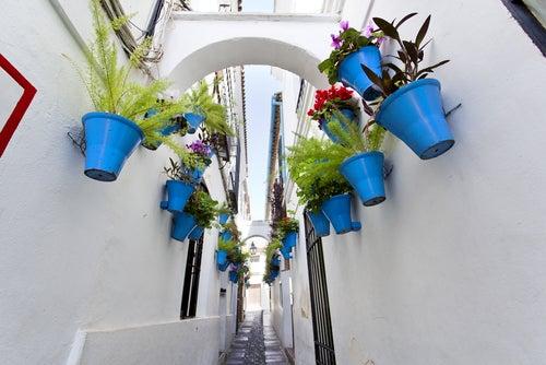 Calleja de las Flores del Córdoba
