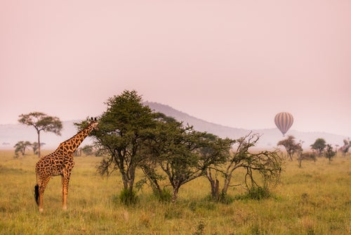 Viaje en globo sobre Kenia