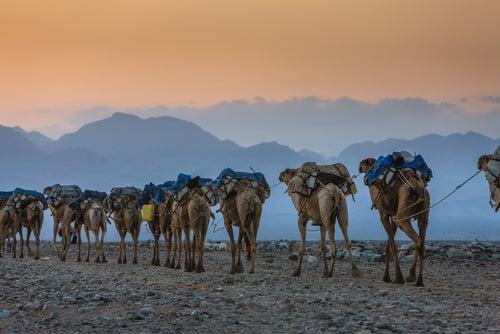Caravana de camellos en Etiopía, uno de los países meno conocidos