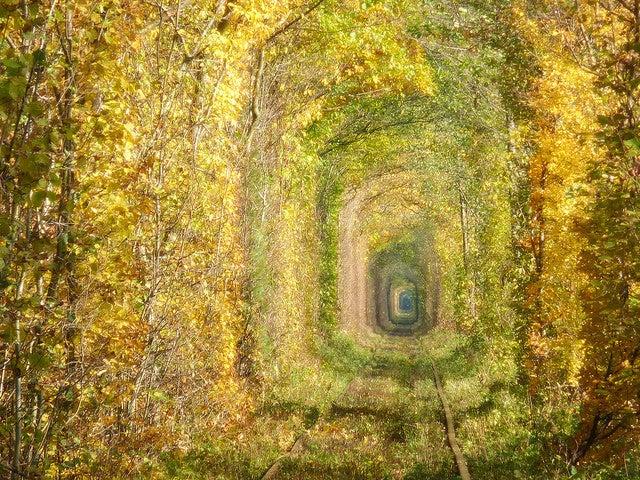 Túnel del amor, uno de los túneles de árboles más bellos