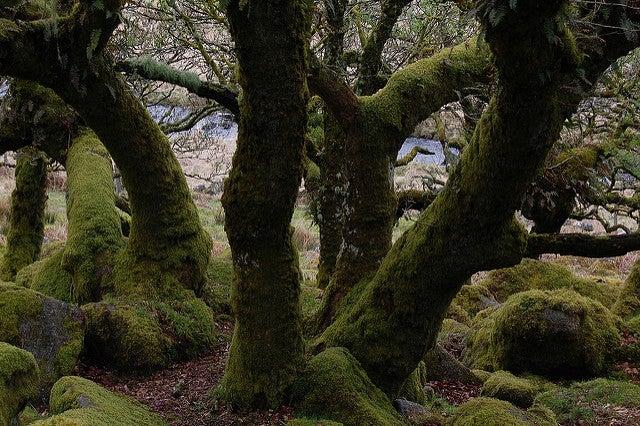 BosqueWhistsman, uno de los bosque encantados