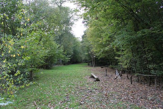 Plucley un pueblo con bosques encantados