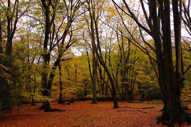 7 bosques encantados que te dejarán atrapado