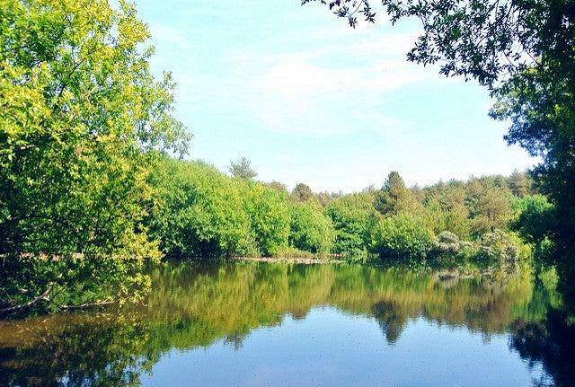 Bosques encantados: Pembrey