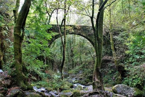 Puente en Fraguas del Eume