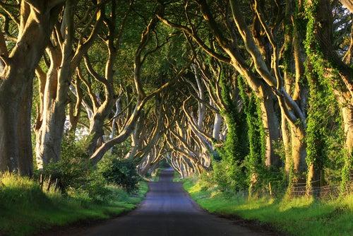 Dark Hedges, uno de los túneles de árboles más increíbles