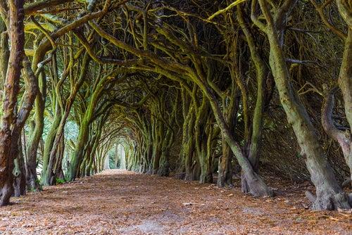 8 túneles de árboles que te dejarán boquiabierto