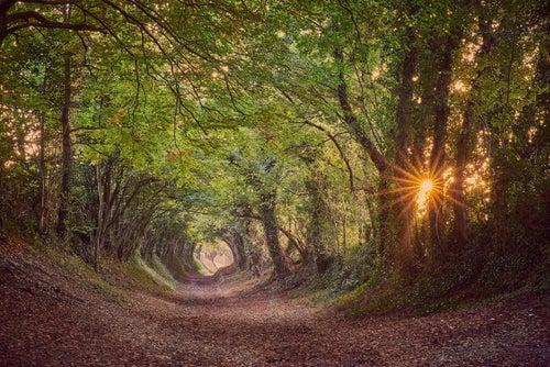 Hallnaker, uno de los túneles de árboles más bonitos