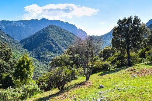 Sierra de Grazalema, el gran muro de Andalucía
