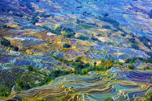Campos de arroz en Yunnan