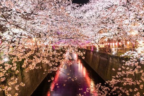 Túnel de Sakura, uno de los tçuneles de árboles más bonitos