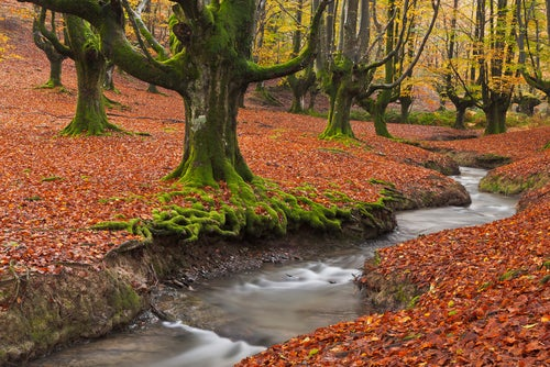 Parque Natural Gorbea en otoño