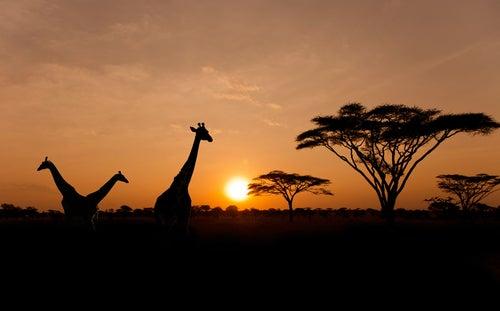 Amanecer en el Parque Nacional Serengueti