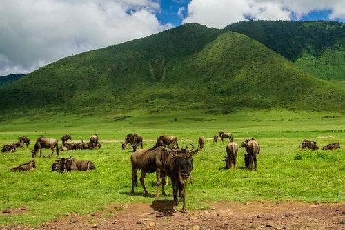 Animales en Serengueti