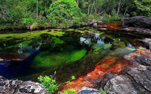 Caño Cristales en Sudamérica