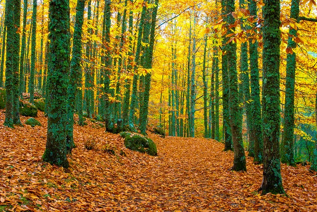 Castañar de El Tiemblo,perfecto para perderse en otoño