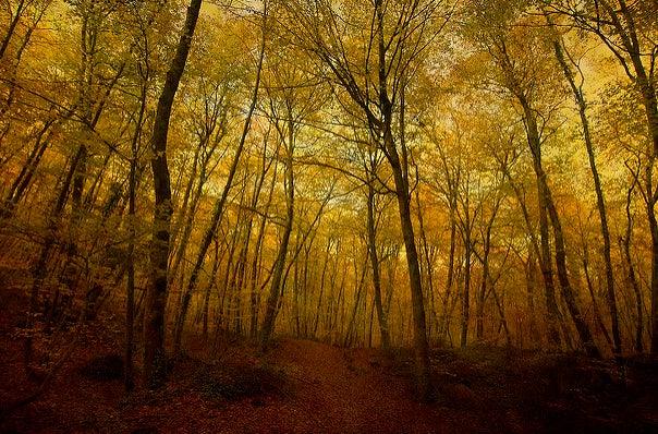 Fageda d'em Jordá, lugar para perderse en otoño