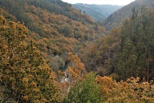 Fragas do Eume en otoño