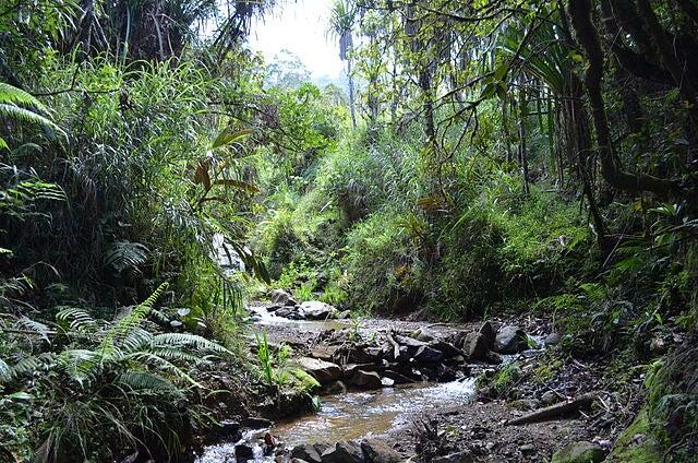 Descubre Papúa Nueva Guinea, un país fascinante