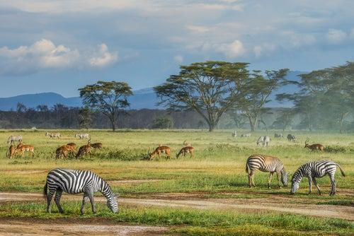 Masai Mara en Kenia para una luna de miel diferente
