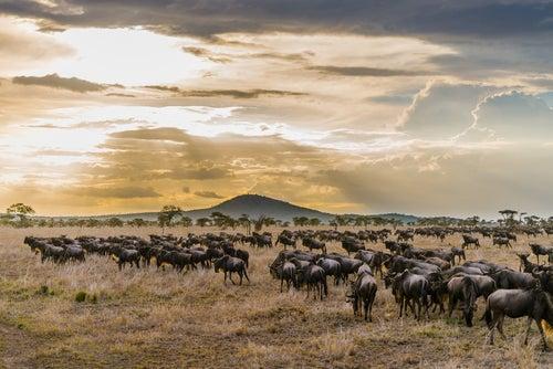 Migración en el Parque Nacional Serengueti