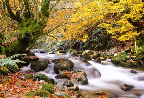 Bosque de Miniellos perfecto para perderse en otoño
